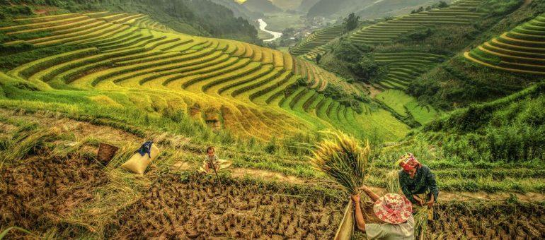 Les Hmong, du Laos à la Guyane