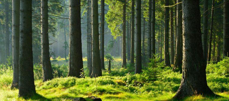 Défiscalisation investissement forestier