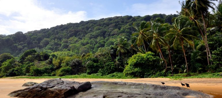 Loi Girardin et la Guyane